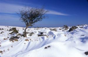 Drifting Snow & Tree Belstone Ridge